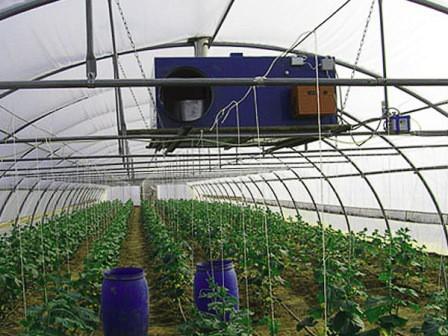 Режим и температура для выращивания помидор