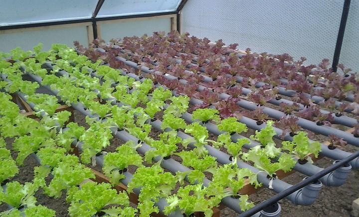 выращивание цветов круглый год в открытом грунте белье для повседневной