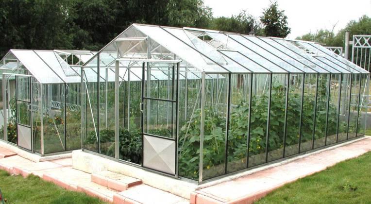 От правильного выбора остекления теплицы зависят сроки получения качественного урожая.