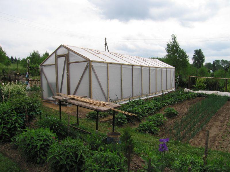 Пленочная теплица на дачном участке – легко возводимое и дешевое строение.