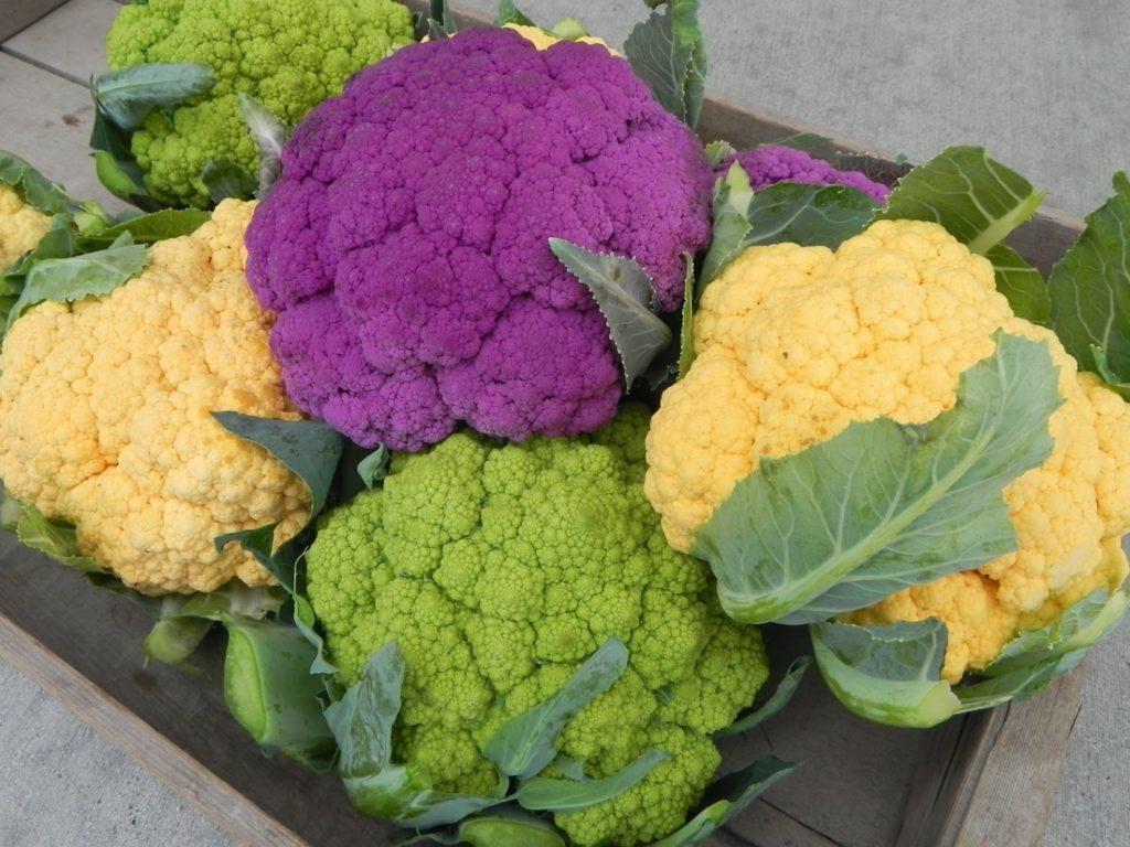 Разновидность цветной капусты