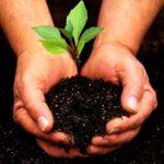 Для высадки растений в открытый грунт