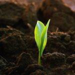 Растительный грунт, применяется строго для выращивания растений