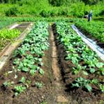 Сады и огороды