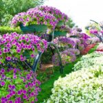 Шикарный сад