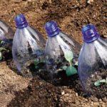 В первые дни после пересадки растения нужно притенять и защищать от заморозков