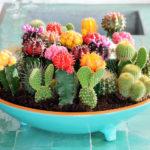 Набор кактусов для выращивания в теплице