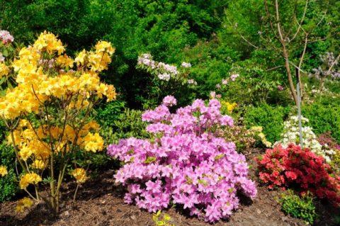 Оформление участка цветами