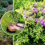 Технология посадки кустарника
