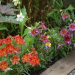 Бордюр из низкорослых цветов