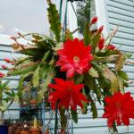 Необычный крупноцветковый сорт