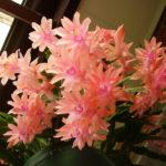 Цветы нежного лососевого оттенка