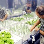 Выращивание рассады на питательном растворе