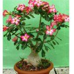Цветущее растение в возрасте 3-4 года