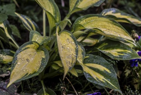 Влажность – важное условие для роста растений