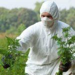 Контактировать с растением рекомендуется с использованием средств защиты