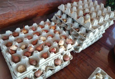 Один из удачных способов хранения – в картонных лотках для яиц