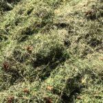 Трава быстро сохнет, теряя объем