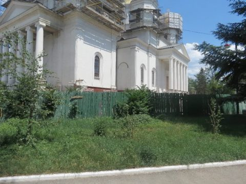 В Крыму растение встречается повсеместно, особенно вокруг недостроенных и заброшенных объектов