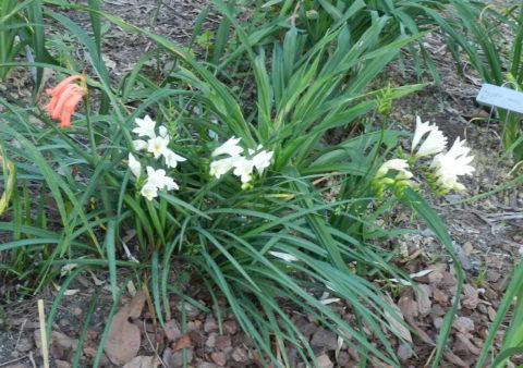 Мульчирование обязательно для растений, высаженных в открытый грунт