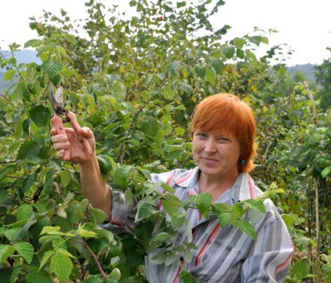 Осенняя обрезка – залог хорошего урожая в следующем сезоне