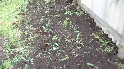 Перекопанный участок