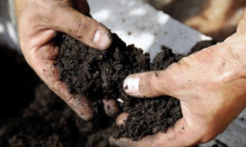 Подготовка и удобрение почвы