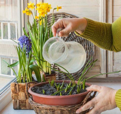 Рассаде необходим регулярный полив и рыхление