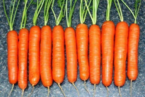 Такая морковь хранится хуже