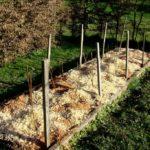Завершающий этап пересадки – мульчирование почвы
