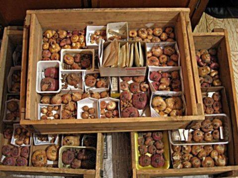 Если у вас много разных сортов, хранить их лучше в отдельных коробочках