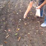 Посев в борозды