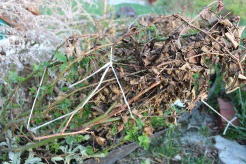 Укрытие из веток и листьев