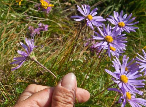 В тени растения вытягиваются и хуже цветут