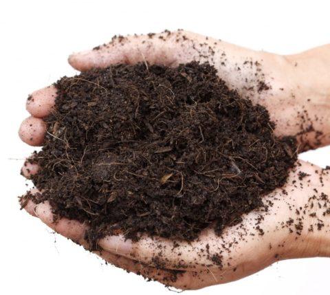 Бедную почву можно смешать с компостом или перегноем