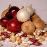 Для озимого посева можно использовать самые крупные и самые мелкие луковицы