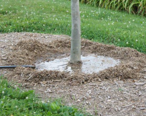 Влагозарядковый полив деревьев