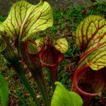 Изящная форма листьев напоминает цветы
