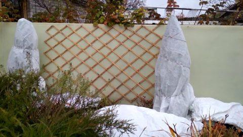 Такое укутывание защитит и ветки от переломов под тяжестью снега
