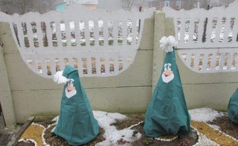 В таком наряде кусты будут украшать участок и зимой