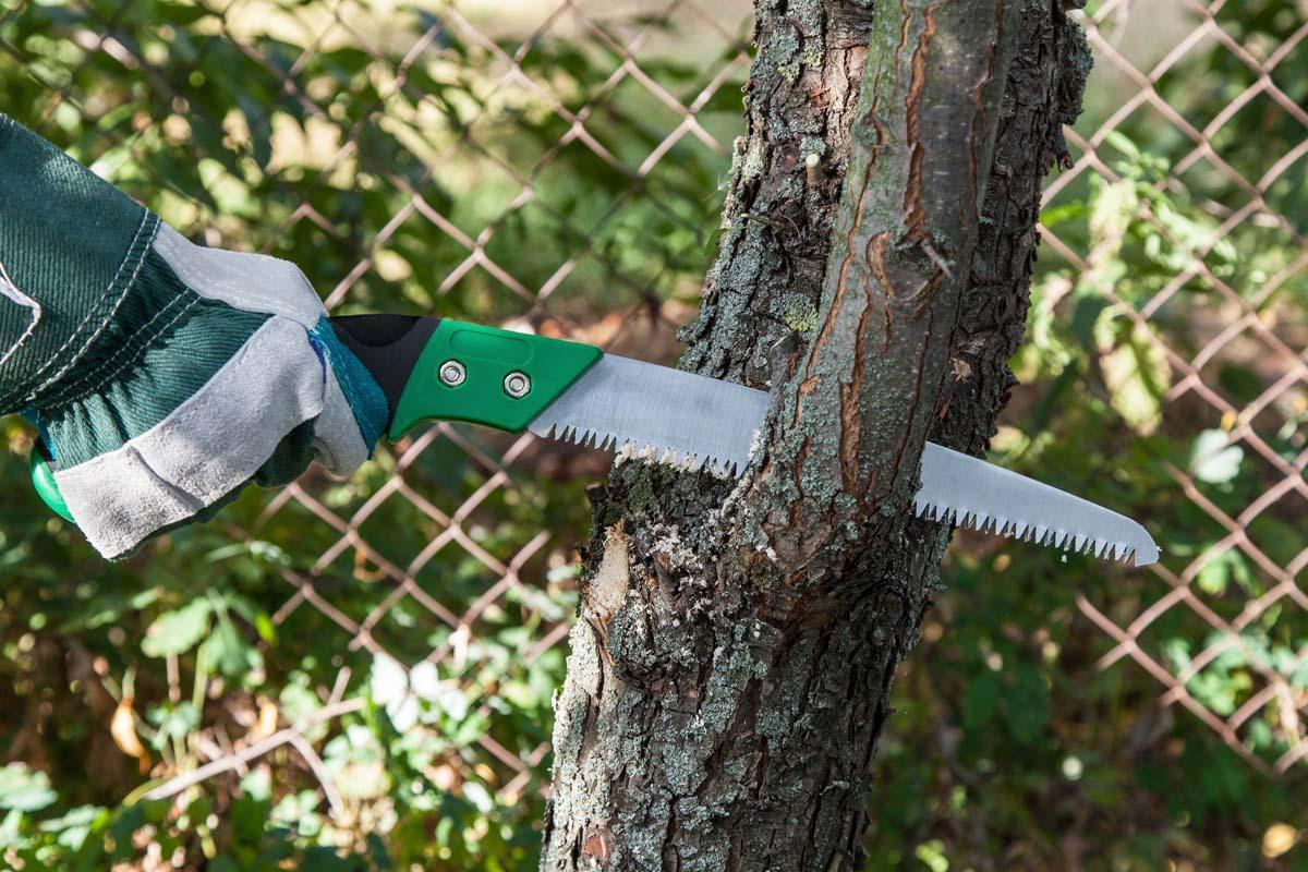Чем замазывать спилы на деревьях