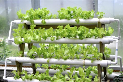 Для зеленных культур расположение теплицы особого значения не имеет