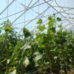 Сроки выращивания культур можно сместить
