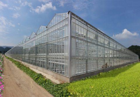 Теплицы, построенные по голландской технологии
